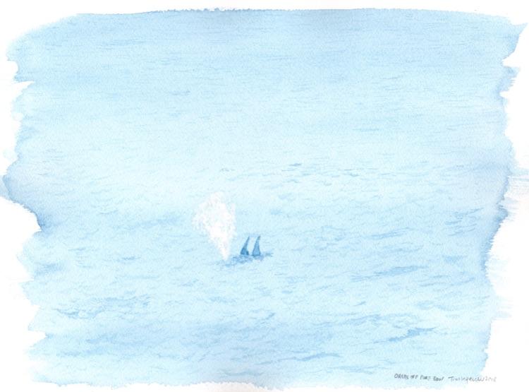 Orcas off Port Bow. 23 x 31cm