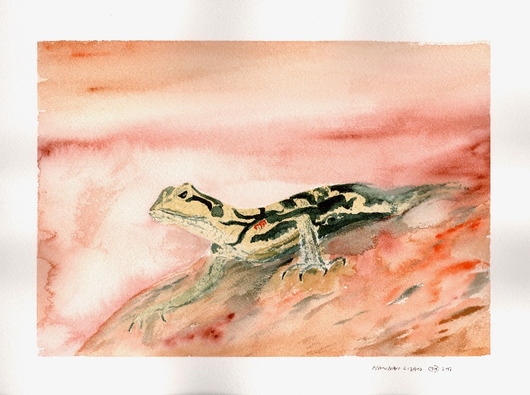 Namibia Lizard. 26 x 18cm