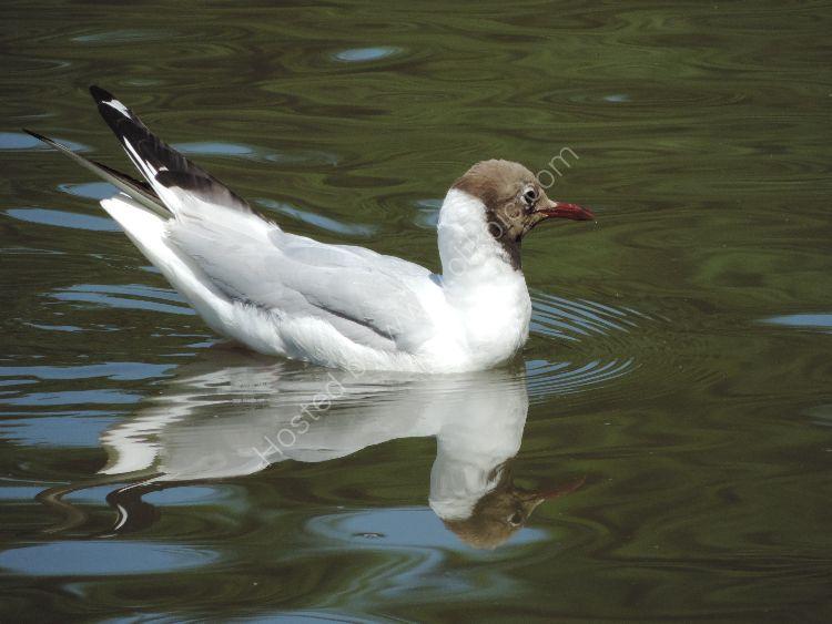 Bird 41