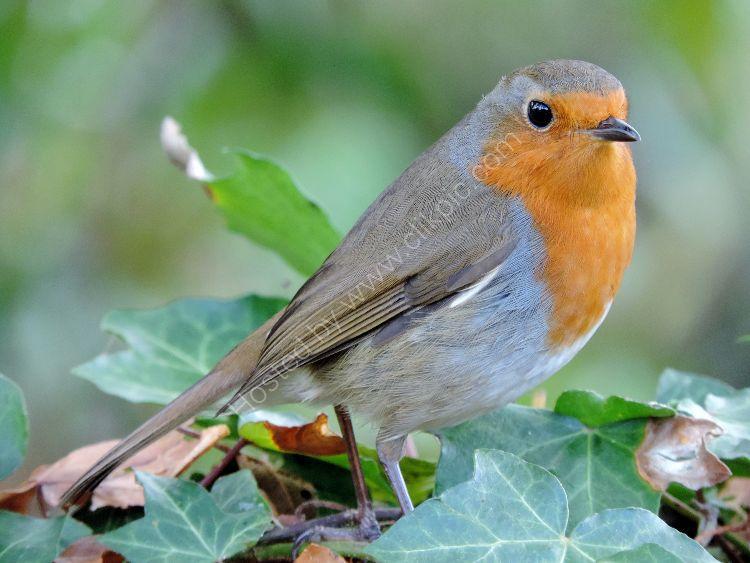 Bird 90