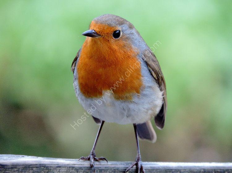 Bird 91