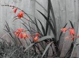 Flowers 19
