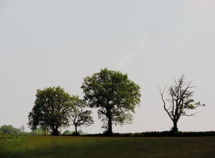 Landscapes 51