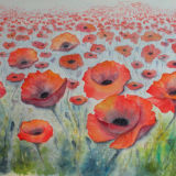 Poppies - SOLD