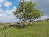 Survivor - Fallen Tree. Grand Winner of Trees with Character Photo Challenge.