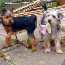 Baxter & Bailey
