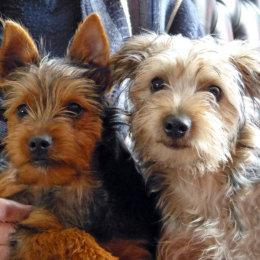 Bailey & Baxter