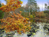 Autumn at Bystock Pool