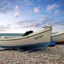 Daisy on Budleigh beach