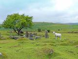 A Sheeps view of Dartmoor
