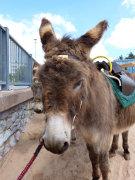 Bonnie the beach donkey