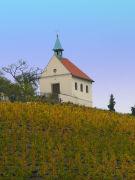 Czech Vineyard