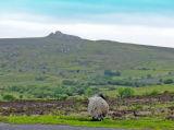 Windy Dartmoor