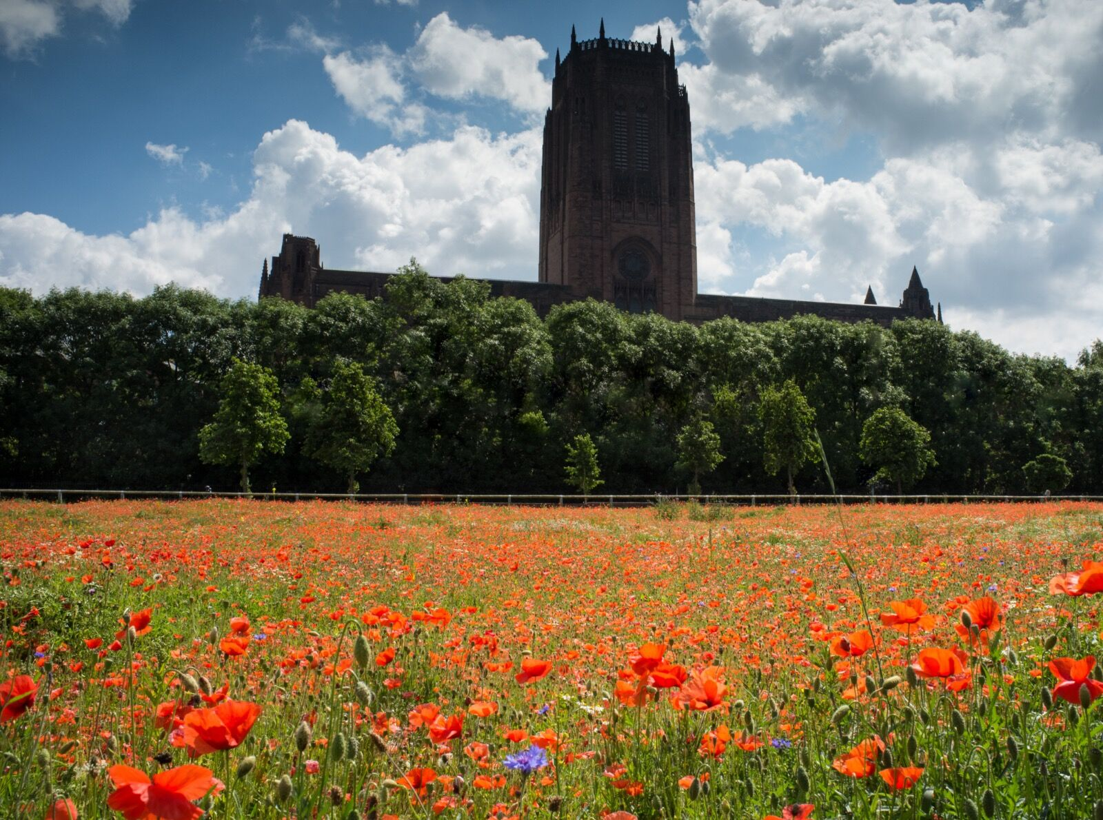 Liverpool Anglican Cathedral from the poppy fields