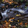 Flowing through Autumn