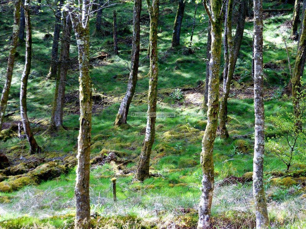 Dunlossit Forest