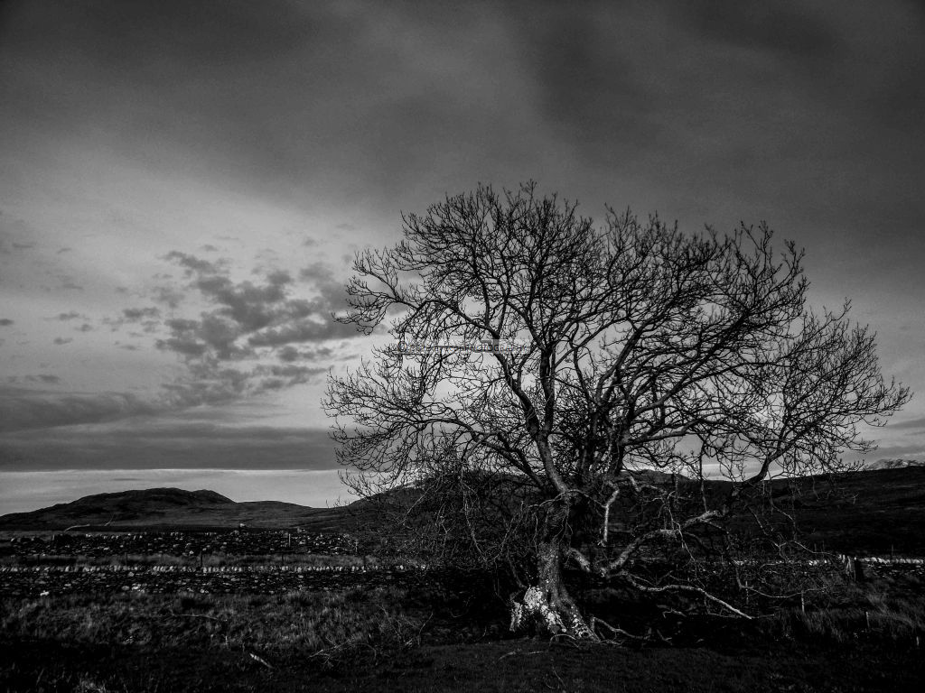 Old Tree in the Glen