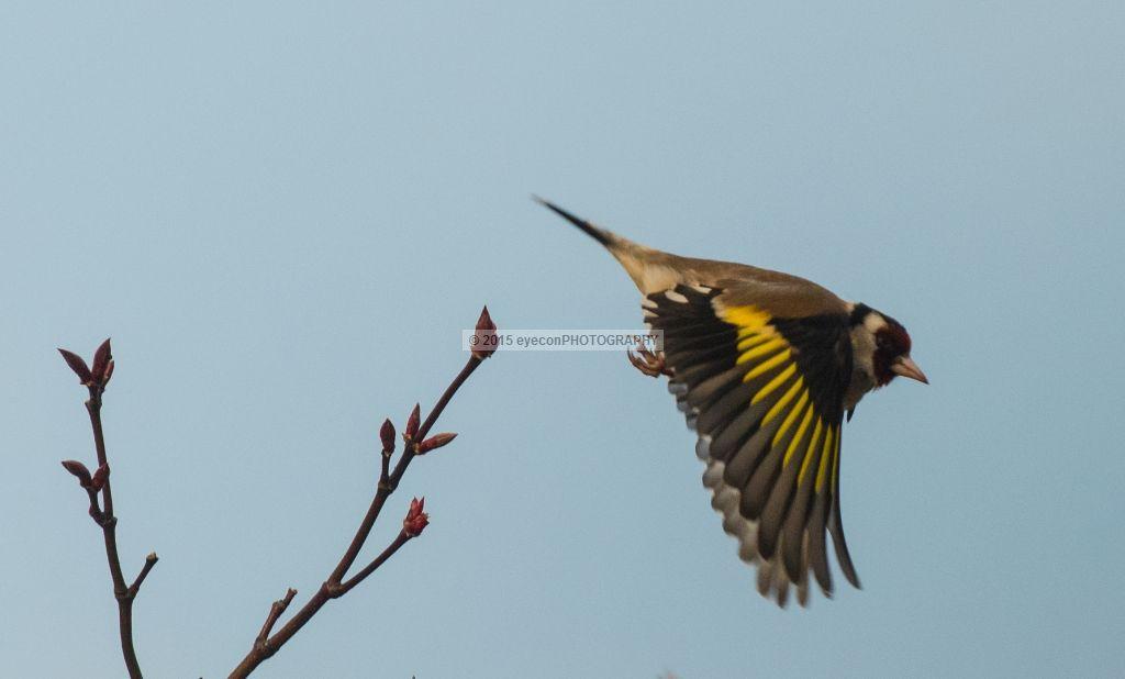 Leap of Flight