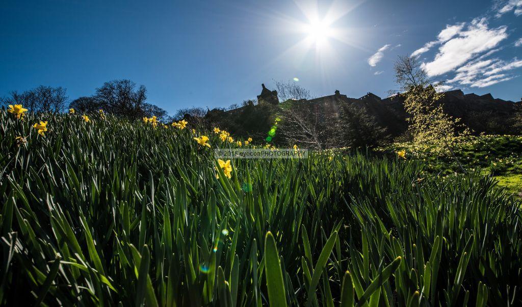 Spring Bloom Below Edinburgh Castle