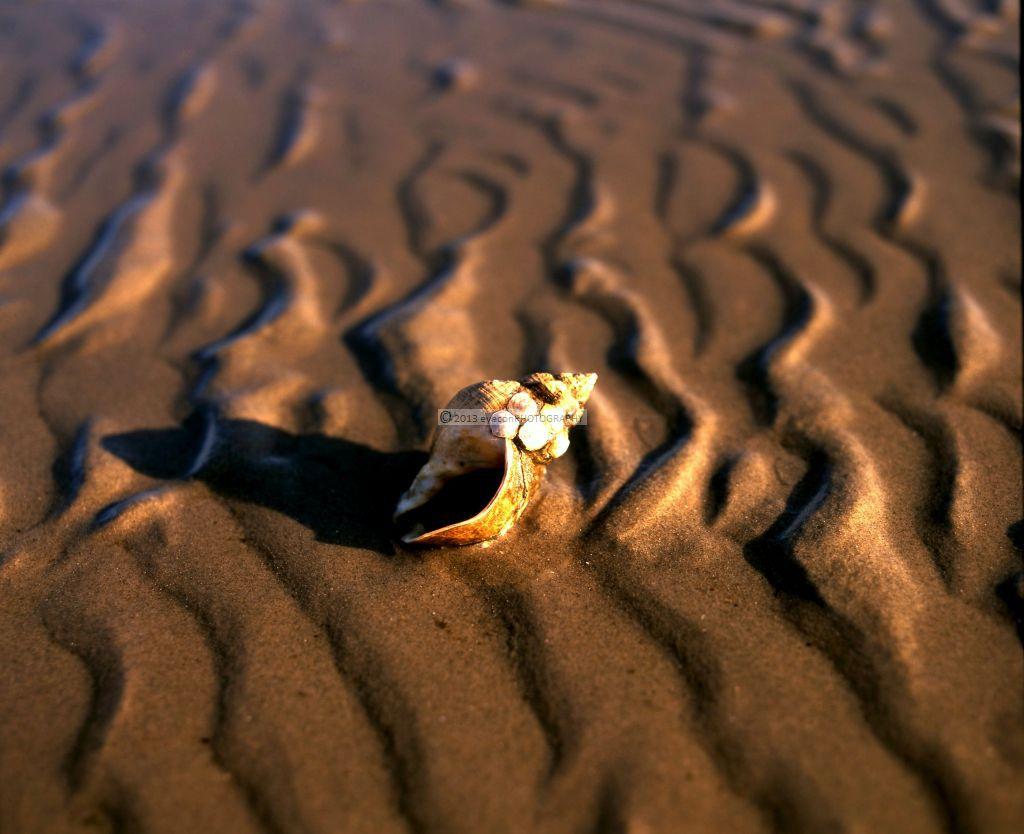 Lone Shell