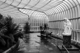 inside botanic gardens glasgow