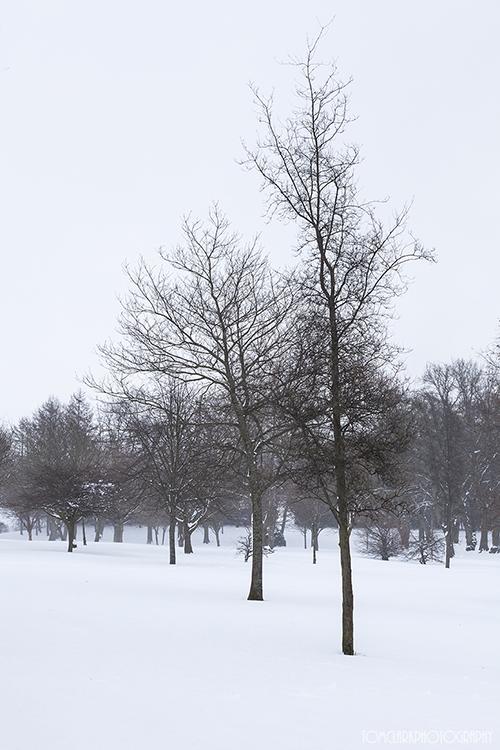 levengrove trees.