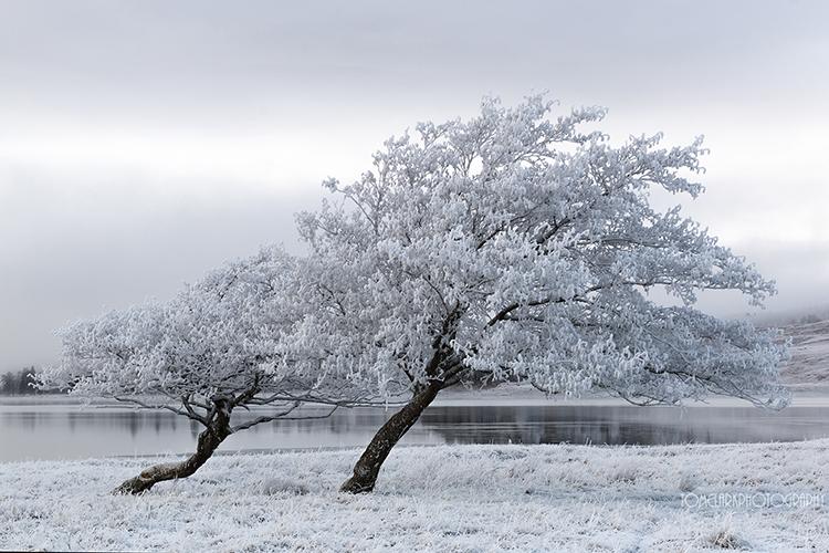 loch tulla trees.