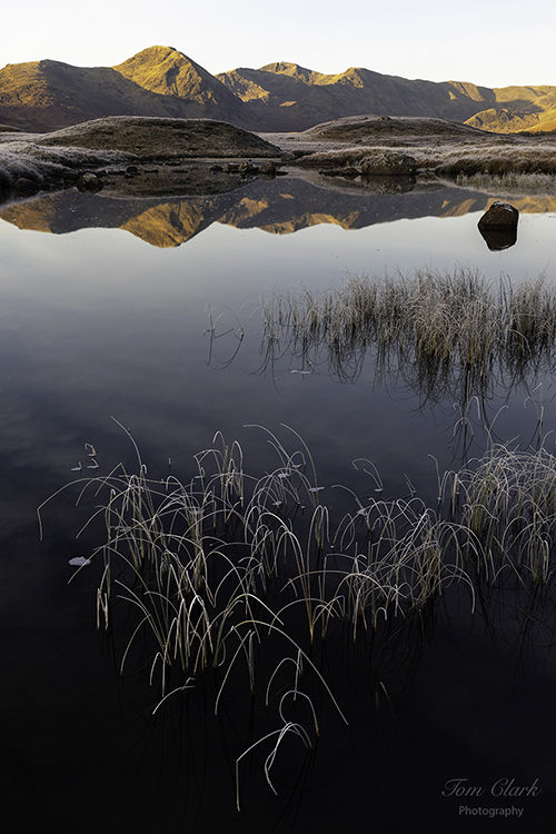 rannoch reeds