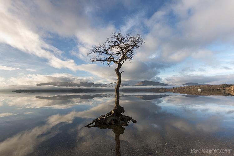 the milarrochy tree...