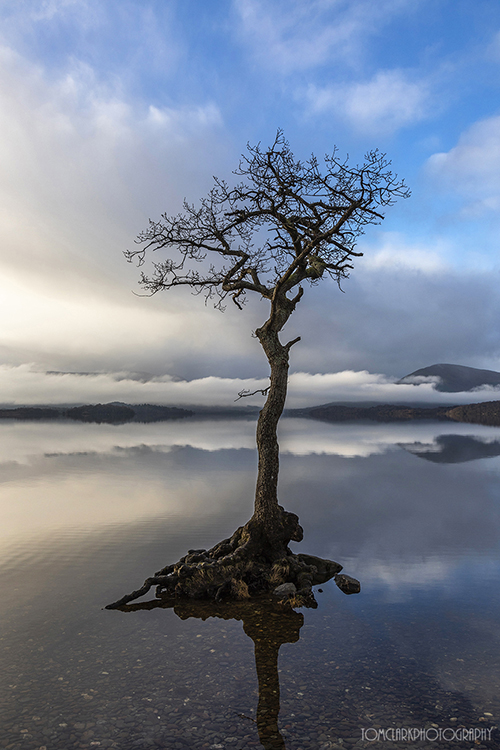 the tree and mist .