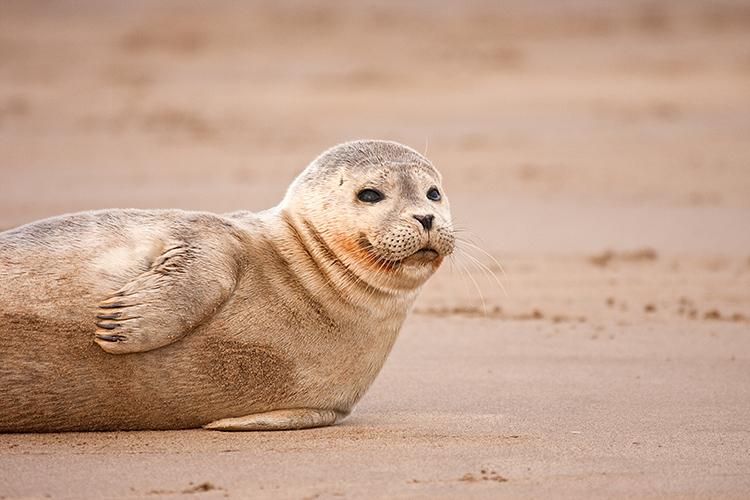 sl01 Seal