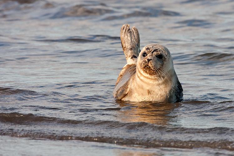 sl02 Seal