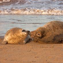 sl03 Seal