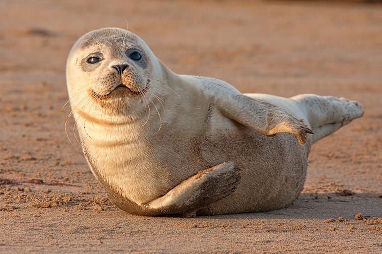 sl04 Seal