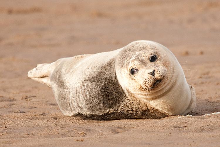 sl05 Seal