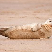 sl06 Seal