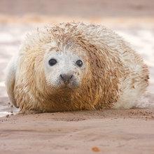 sl09 Seal