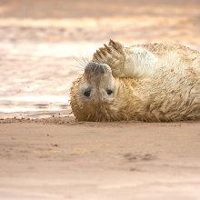 sl10 Seal