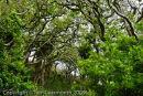 Teague's Wood, Pembrokeshire