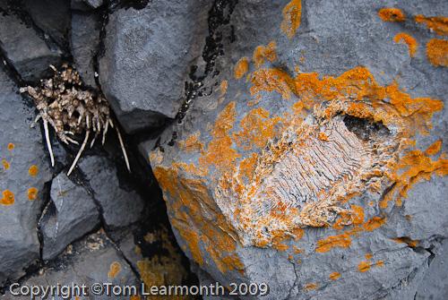 Fossils, Castlemartin Range, Pembrokeshire