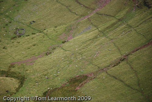 Sheep tracks on the Carmarthen Fan