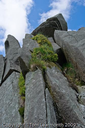 The 'Altar Rock', Carn Meini, Preselis