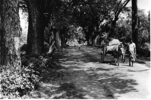 Road in Rajshahi district