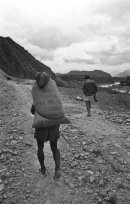 Aid wheat  leaves Pokhara