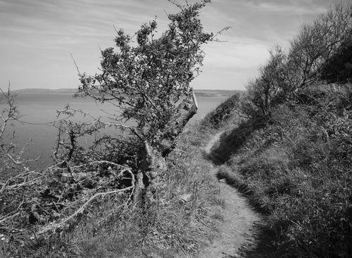 3b.Dinas Island over 30 years