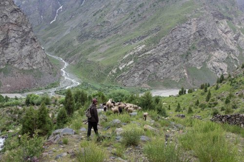 Goat herder above Jespa
