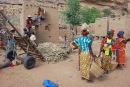 Millet harvest, Teli village, Mali
