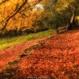 Autumn grizedale 1