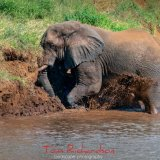 Elephant Mud Bathing in the Luvuvhu River