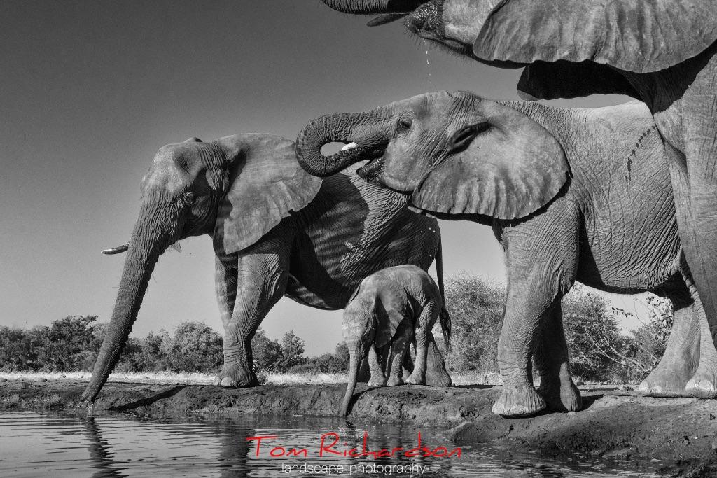 Elephants at the Matabole Hide Mashatu